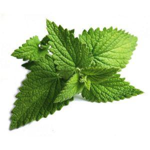 hojas-de-menta
